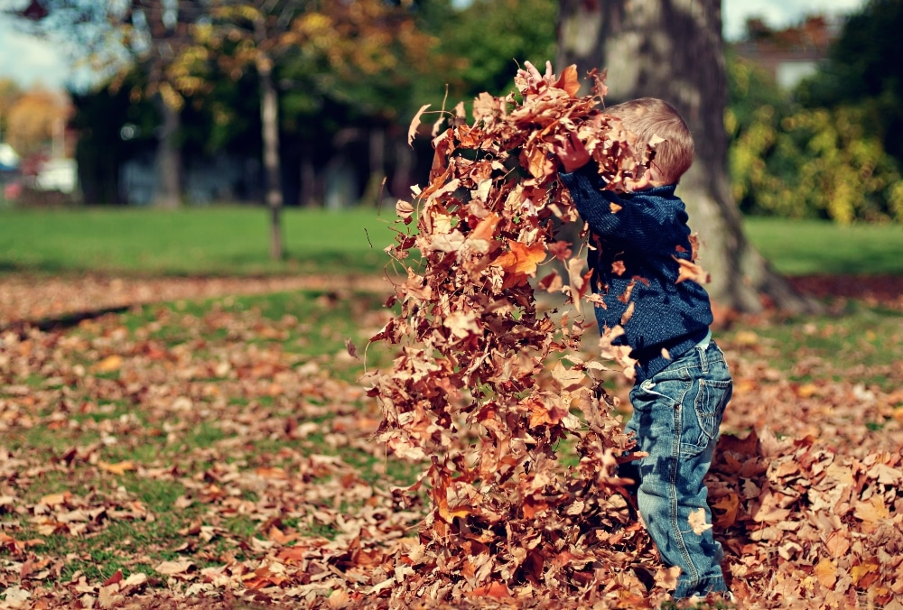 child playing in fallen leaves